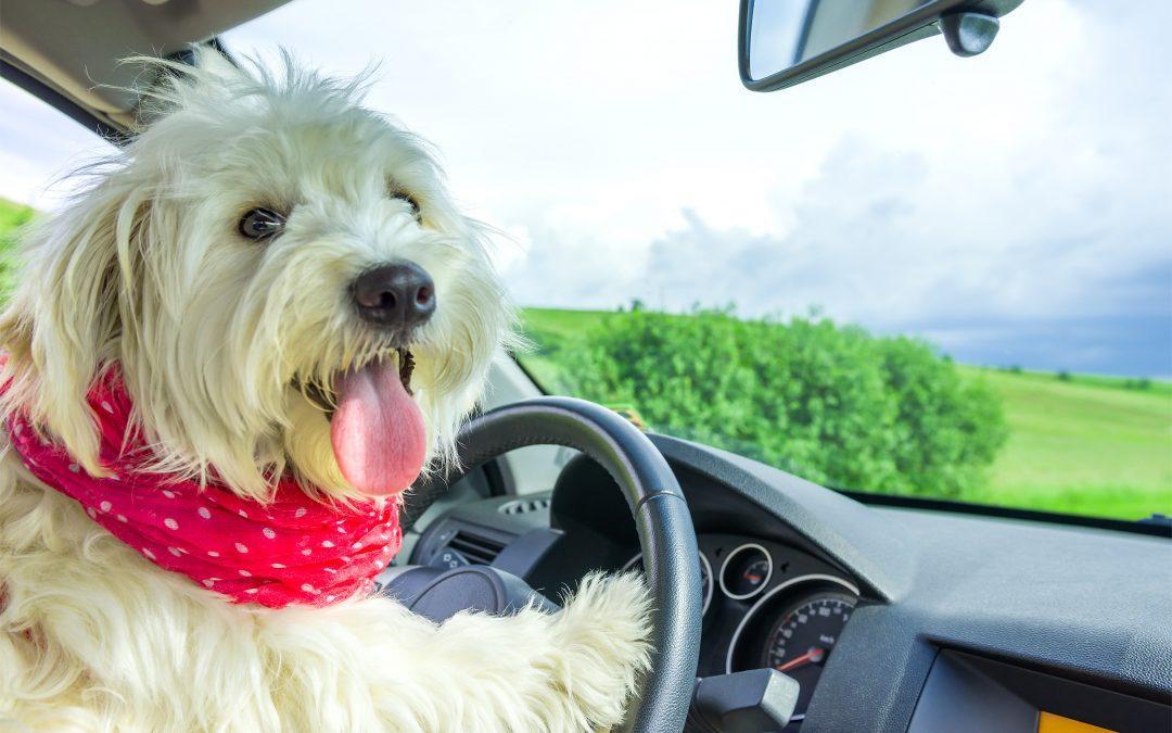 Steering Feel Funny?